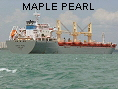 MAPLE PEARL IMO9545560