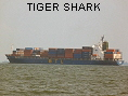 TIGER SHARK IMO9077290